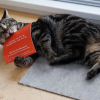 Cats get all excited for catnip flavoured flyers!