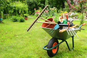 Survey reveals most people find gardening a chore for Cesu jardinage
